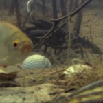 Golfing with Animals - Underwater