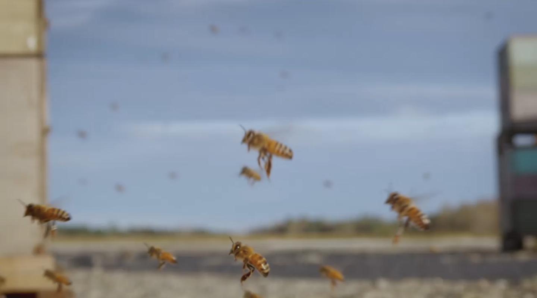 Honungsfabriken